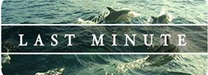 wid-lastminut