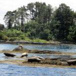 phoques-sur-Garinish-Island