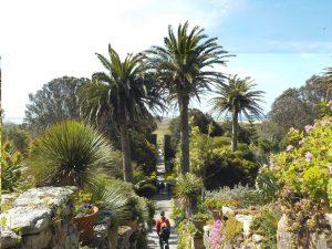 Le jardin exotique de Tresco